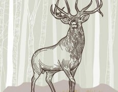 NEW ON ISTOCKPHOTO: ELK SCENE