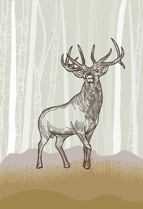 Elk illustration