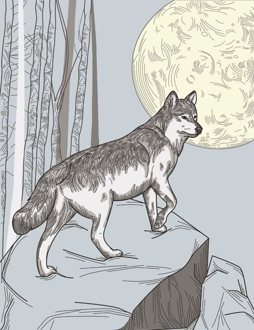 wolf and moon illustration