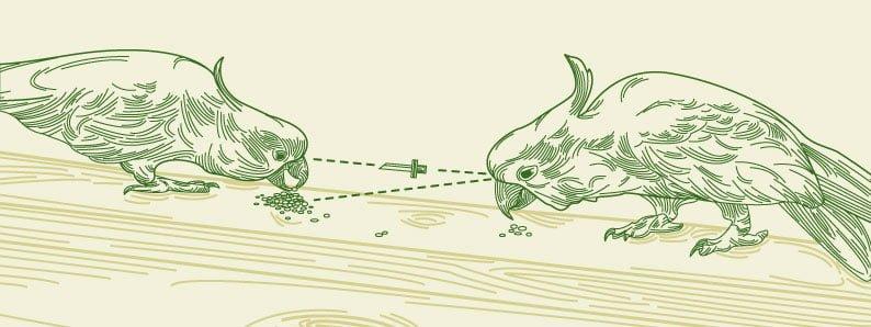 cockatoo death match